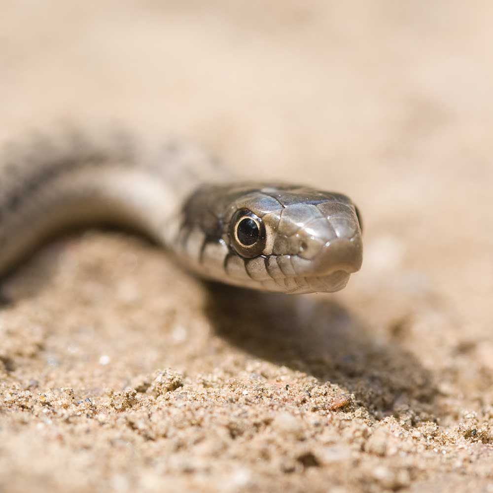 Baby Snake Face by James Einspahr