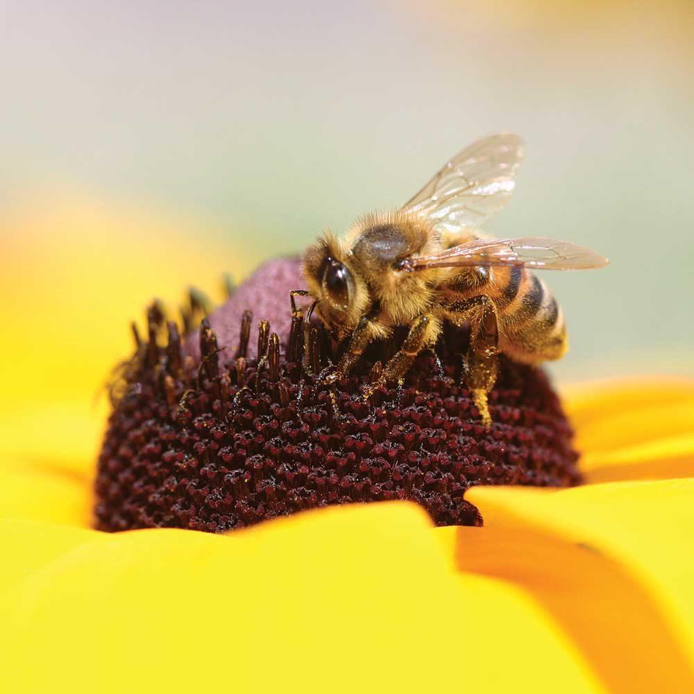 Macro Bee by James Einspahr